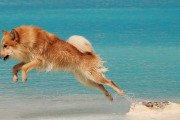 Viktigheten av at hunden din får god hundemat